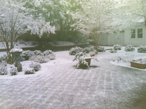 Snow day, January 2012.